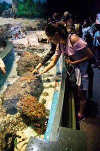 sea akuarium singapura