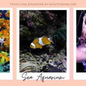 sea aquarium sentosa singapura